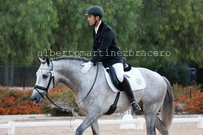 Andalusian Horse Duero